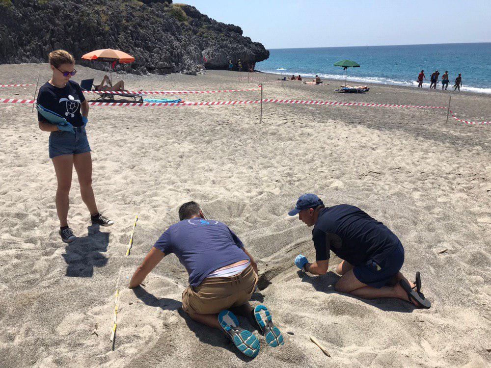 Camerota, un corso in spiaggia per riconoscere le tracce di tartaruga