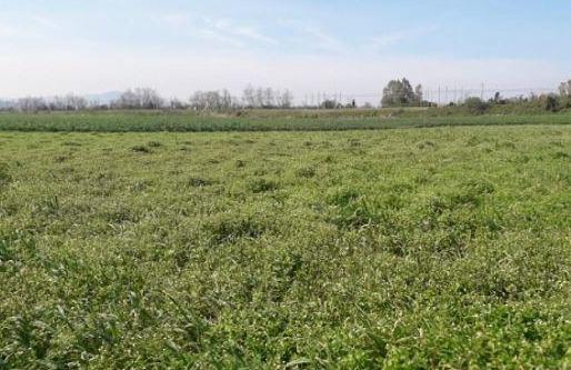"""Produrre cereali recuperando terreni incolti, Pollica aderisce a """"Terre dei Parchi"""""""