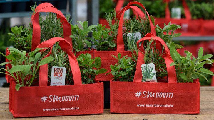 Sclerosi multipla, a Caselle in Pittari tornano le erbe aromatiche per la ricerca