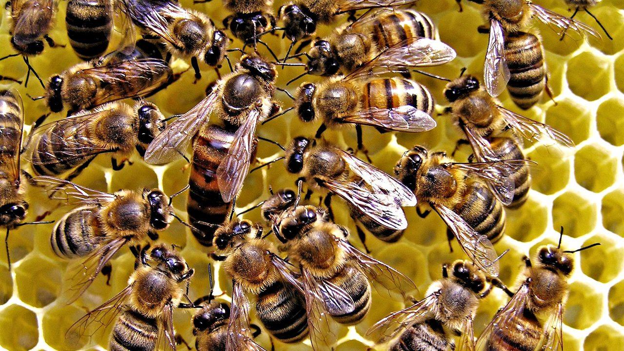 Parco del Cilento, uno studio sul biomonitoraggio delle api
