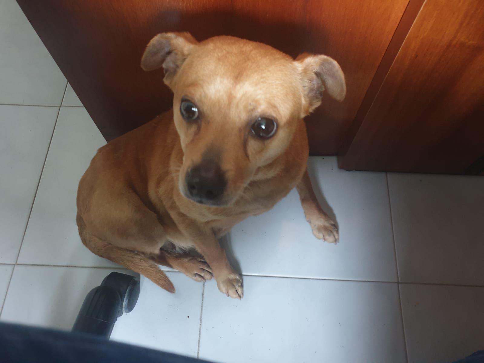 Sessa Cilento, cagnolina abbandonata trovata dai carabinieri forestali. L'appello: «Adottatela»