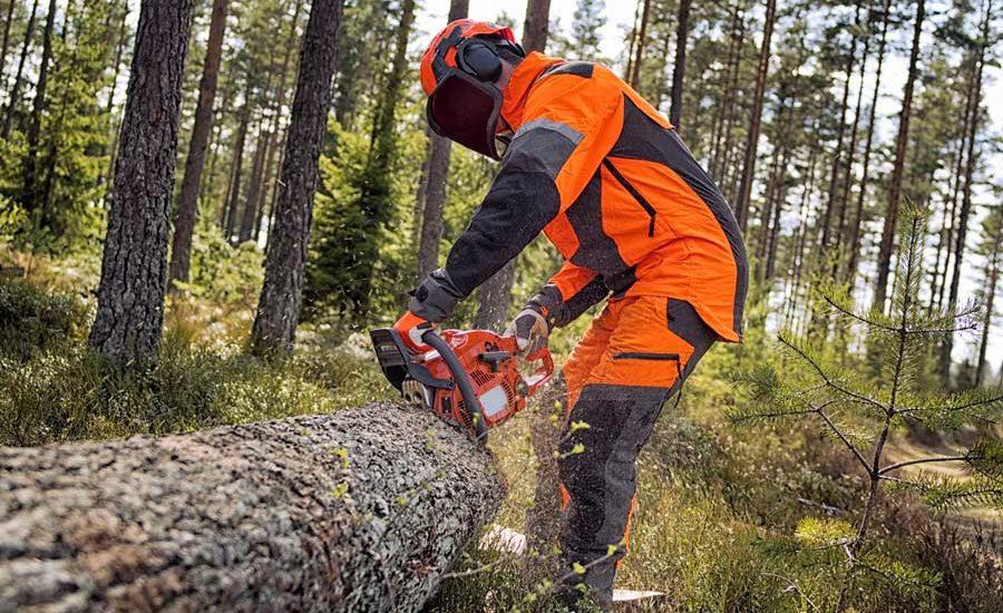 Vallo di Diano, assunti 73 idraulico forestali della Comunità montana
